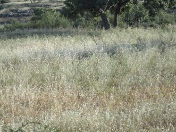 Residential Land in Pachna, Limassol